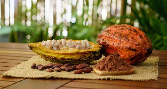 Čokoládový rituál